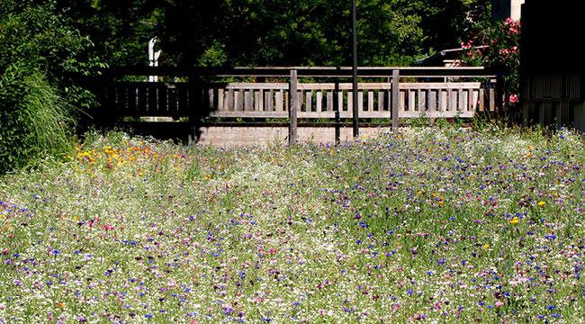 plate-bande de prairie fleurie de 1300 m2, au Parc Urbain