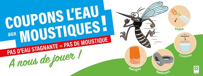 Moustique tigre à Villeneuve